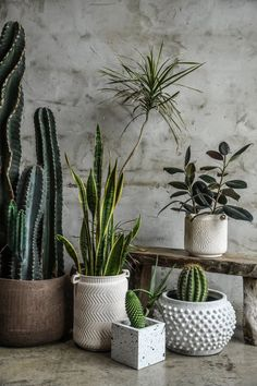 "Plant daddy Hilton Carter has the best modern planter ideas We asked ""plantfluencer"" Hilton Carter to share some of his favorite modern planter ideas to cultivate your indoor jungle, and his picks did not disappoint. Painted Plant Pots, Painted Flower Pots, Indoor Flower Pots, Indoor Plants, Indoor Cactus, Foto Poster, Flower Pot Crafts, Decoration Plante, Modern Planters"