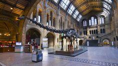 Natural History Museum atrium
