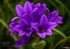 Purple flower II by Popi_Kmb83. @go4fotos