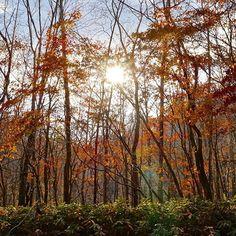 【reijoh0525】さんのInstagramの写真をピンしています。《先週お邪魔した知人の隠れ家からの1枚🌲 聴こえるのは落ち葉を踏む自分の足音と鳥のさえずりだけ🍂🍁 いつ迄も居たい至福の時間でした☺️ #静寂 #silence #秋 #autumn #林 #forest #写真を撮る人と繋がりたい  #ファインダー越しの私の世界  #instagramjapan  #instalike  #instagood  #bns_lite #total_portugal #ig_marasl_diyari #ig_great_pictures  #ig_estradas #eyecatching_pics #fabulous_shots #myheartinshots  #theoutcreww #natura_love_ #art_of_japan #pics_jp #sonyα》