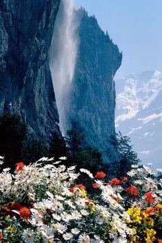 contraste de flores