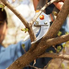 Bush Pruning Tips for Healthier Bushes- Regularly pruning bushes and shrubs can make the difference between a ragged, scraggly garden and an attractive, lush showplace. These tips will guide you through the basics.