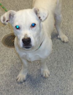 PLEASE RESCUE FROSTY...Summit County Akron, Ohio...Adopting a friend~Dogs (and puppies) are $ 90.00 : $ 76.00 for the adoption / $ 14.00 for the licensesCats (and Kittens) are $60.00 : $60.00 for the adoptionAll age appropriate animals are receiving a one year Rabies Vaccination. All adoptable...