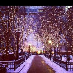 #BeautifulThings #FairyLights #Trees #Snow #Winter