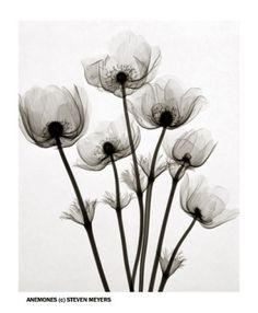 X-ray Flower Prints: