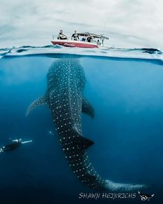 Printing Ideas Useful Info: 9188936600 Deep Sea Creatures, Shark Swimming, Wale, Underwater Life, Shark Week, Big Fish, Ocean Life, Marine Life, Under The Sea