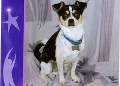 gordo - Who's the Cutest Pet? www.CuteARater.com
