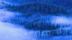 Misty Blue Hills