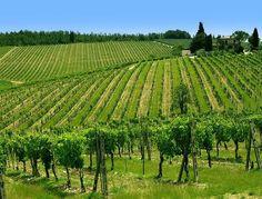 Castellina in Chianti #TuscanyAgriturismoGiratola