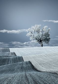 Something about a stand alone tree that always touches my soul. Beautiful! Lonely tree in the snow