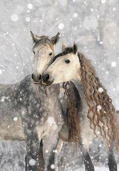 Dapple #horses long wavy #manes  400px.blogspot.com