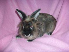 Meet Tinkerbelle! #animalrescue #bunnies #adoptdontshop