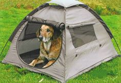 Camping with your pooch!