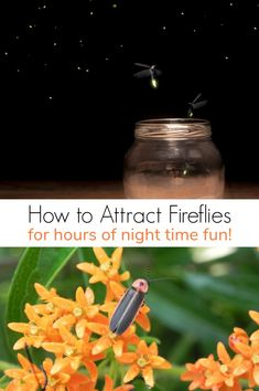 Attracting fireflies is a great way to entertain kids after dark. Learn how to attract fireflies for hours of night time fun! Eco Friendly Cleaning Products, Green Living Tips, Sustainable Food, Sustainable Living, Diy Garden Projects, Garden Ideas, Cleaning Recipes, Grow Your Own Food, Green Cleaning