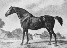 Sweetbriar by George Stubbs