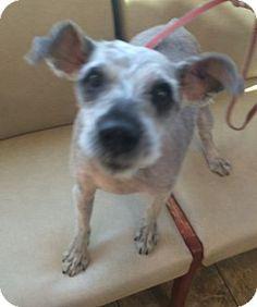 Oak Ridge, NJ - Schnauzer (Miniature) Mix. Meet Kenny, a dog for adoption. http://www.adoptapet.com/pet/17900154-oak-ridge-new-jersey-schnauzer-miniature-mix