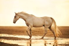 by equine images