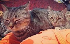 """#kitties #mycats #cutecat #babies #catstagram #catsofinstagram #loveofcats #lovelycat "" Cat Run, Cats Of Instagram, Instagram Posts, Kitty, Babies, Pictures, Animals, Little Kitty, Photos"