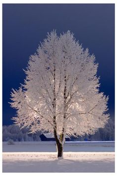 Snow Tree, Stockholm, Sweden Just beautiful ! Winter Szenen, Winter Magic, Winter White, Winter Trees, Winter Night, Snow White, Winter Coats, Beautiful World, Beautiful Places