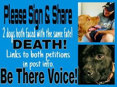 Please #Sign BOTH #PETITIONS #SHARE #RT #GOOGLE+ Niko's Petition --》https://www.change.org/p/supreme-court-of-virginia-please-over-turn-niko-s-death-sentence  Chevy's Petition --》https://www.change.org/p/don-t-let-them-euthanize-chevy-our-family-dog