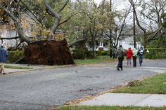 Hurricane Sandy: giant trees fall in Highland Park, New Jersey.  This one hit a house.