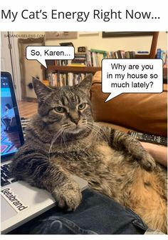 See more 'Karen' images on Know Your Meme! Funny Cat Jokes, Funny Animal Memes, Cat Memes, Funny Animals, Funny Memes, Hilarious, Animal Funnies, Glasses Meme, Best Cat Breeds