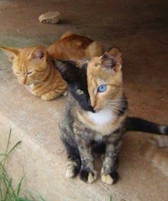 Two faced kitty