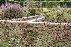 Sanguisorba 'Tanna'. Old Rectory, Quinton. Landscape and Garden Designer: Anoushka Feiler of Bestique Landscape. Contractor: Breathe. Photo: Jacqui Hurst.