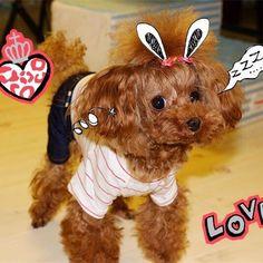 うさぎ🐰です〜〜💕❣️rabbit😜メルカリ出品中🎀😆💛店舗の名前:rinko_pets#ミニチュアダックス#トイプードル#犬#わんちゃん#わんこ#ネコ#ふわふわ#癒し#癒し系#子犬#お気に入り#愛犬#大好き#おしゃれ#日本#可愛い#dog#doglife#cute#pet#like#puppy#cutedog#funnydog#instadog#fashion#japan#Rinko_pets