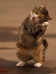 dancing-cat 3