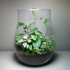 11 Best Terrariums Heart And Soil Terrariums Images Terrarium