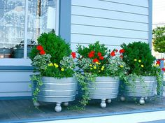 Love the use of galvanized tubs with feet attached for the container gardens which consist of a mixture of evergreen shrubs with red geraniums and vines like Vica.....