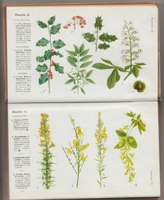 patouillis and splashing action: The names of flowers found by the simple method