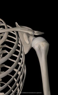 "The Rotator Cuff Screams, ""Don't Do This Exercise!"" 