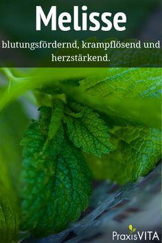 Melisse - die Heilpflanze des Jahres 2006 Scientifically proven is the effect of melissa in function Diy Herb Garden, Garden Plants, Good To Know, Feel Good, Forest Bathing, Chakra Meditation, Pallets Garden, Water Flowers, Companion Planting