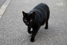 Animal Spot: Demaskujemy i obalamy mity na temat kotów.