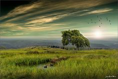 Green Dream by Jean-Michel Priaux, via Flickr