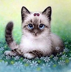 Cute Cat with bow - Stretched Canvas