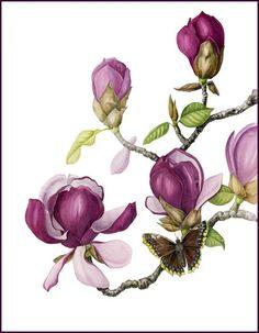 """""""Magnolia & Capa de luto"""" era uno de los 100 de cada 1.200 pinturas aceptados en el """"ll Flores"""" Susan K negros.  La exposición itinerante ha recorrido el país durante los últimos 18 meses.  Es debido a volver a mi estudio en mayo.  Es una de mis pinturas preferidas.  La acuarela original es de 14 """"x 18"""" y está disponible para la compra.  impresiones de edición limitada están disponibles.  En contacto conmigo en Mlighthipe@gmail.com si está interesado .:"""