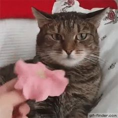 Cat Can't Handle Flower | Gif Finder – Find and Share funny animated gifs