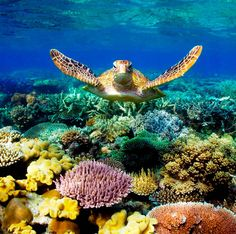 Greet Barrier Reef - Queensland, Australia