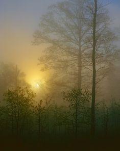Image for Foggy Hardwood Forest