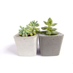 Concrete Planter for Succulent Home Decor Cacti Pot Modern Square... ($7.66) ❤ liked on Polyvore featuring home, home decor, square pots, succulent planter, square planters, succulent pots and concrete pot