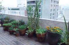 Temperos cultivados em vasos, como salsinha (Coriandrum sativum) e cebolinha (Allium fistulosum), além de ervas para chás, como a erva-doce (Lathyrus odoratus), são a base do paisagismo criado por Gilberto Elkis. Todas essas espécies estão em meio a outras plantas ornamentais, como a mini-romã. Para espantar as pragas, foram plantadas tagetes (Tagetes patula) de flor laranja. O resultado é uma mistura singular de cores, texturas e perfumes