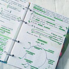 getstudyblr: biology time!