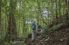 Trekking in Mbeliling forest - West Flores Komodo, Adventure Tours, Trekking, Exotic, Plants, Photography, Fotografie, Adventure Travel, Fotografia