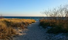 way through dunes #wild #nature #beach #winter #poland #hel #sea #dunes
