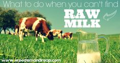 What to do when you can't find RAW MILK https://www.weedemandreap.com/what-to-do-when-you-cant-find-raw-milk/