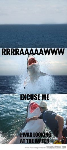 Excuse me, shark…