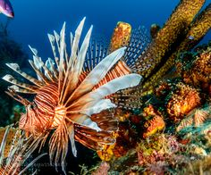 """Lionfish Go to http://iBoatCity.com and use code PINTEREST for free shipping on your first order! (Lower 48 USA Only). Sign up for our email newsletter to get your free guide: """"Boat Buyer's Guide for Beginners."""""""